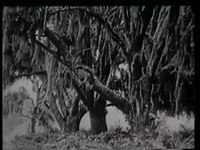 Fail:Evolution (1923) .webm