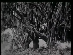 File:Evolution (1923) .webm