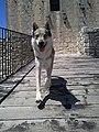 Ezechiele a Rocca di Calascio 04.jpg