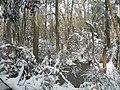 FL Swamp in Snow (5303619683).jpg