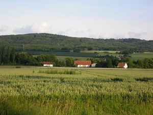 Lübbecke Loessland - The rolling Lübbecke Loessland near Glösinghausen. In the background is the Wiehen. Easy to make out are waving wheat fields and special crops that thrive on the fertile soil