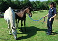 Farfala & Sea the Stars filly foal (6205019975).jpg