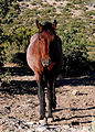 Feral horses Cold Creek,.jpg