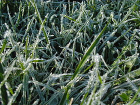 Feuilles-avec-glace-leaves-with-ice-3.jpg