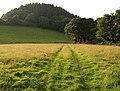 Field near Morley - geograph.org.uk - 905465.jpg