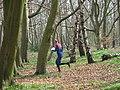 Fine Mature Woodland at Hopwas Hays Wood, near Tamworth. - geograph.org.uk - 24227.jpg