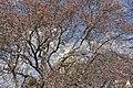 Flickr - USCapitol - Capitol Magnolias.jpg