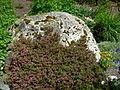 Flickr - brewbooks - Heater rock - Sandy and Ted's Garden.jpg