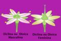 Flor diclina ou dioica.png