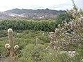 Flora autóctona de la Quebrada de Humahuaca.jpg