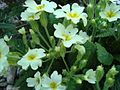 Flora vo Polog (24).JPG