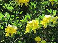 Flores en el Jardín Botánico de Viña del Mar 24.JPG