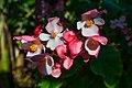 Flower 3555.jpg