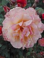 Flower Dortmund 10.jpg