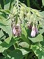 Flower and bee 13.jpg