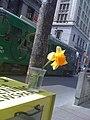 Flower on King Street.jpg