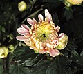 Flowers - Uncategorised Garden plants 128.JPG