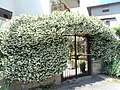 Flowers - panoramio (28).jpg