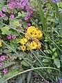 Flowers of Baghdad 23.jpg