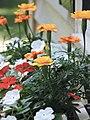 Flowers windowbox picture.jpg