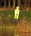 Fluorescent Forlorn Fake Fisherman - geograph.org.uk - 1072597.jpg