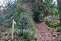 Footpath off Luccombe Lane - geograph.org.uk - 1660451.jpg