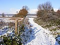Footpath to Ditchingham - geograph.org.uk - 2667423.jpg