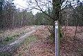 Footpath waymark, Chase Wood - geograph.org.uk - 1272741.jpg