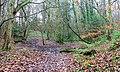 Ford, Bellburn Wood - geograph.org.uk - 299097.jpg