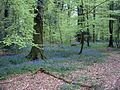 Forest in Andaines, Orne, France - 20040502.jpg