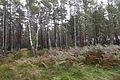 Forst Rundshorn IMG 1444.jpg