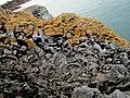 Fossil Corals, Sharkham Point.jpg
