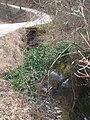 Fosso lungo di Castellonchio - panoramio.jpg