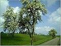 Frühlingsfarben - Allmendingen- panoramio.jpg