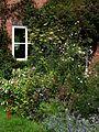 Front garden August 2009 - Flickr - peganum (2).jpg