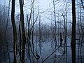 Frozen Teufelsbruch swamp next to crossing path 1.jpg