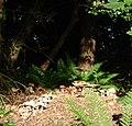 Fungi, Kennels Road near Lupton Lodge, Torbay - geograph.org.uk - 864620.jpg
