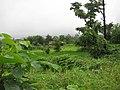 Ganjad, Dahanu - panoramio.jpg