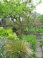 Garden House Brighton - Flickr - peganum.jpg