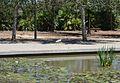 Garseta blanca al parc de la Rambleta, València.JPG