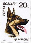 German-Shepherd-Canis-lupus-familiaris Romania 1971.jpg