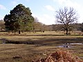Glade north of Stubbs Wood, New Forest - geograph.org.uk - 145239.jpg