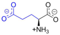 Glutamic Acid at physiological pH.png