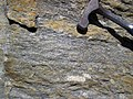 Gneiss (Precambrian; Rt. 93 roadcut next to the New River, Mouth of Wilson, Virginia, USA) 4 (30630357142).jpg