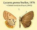 GnomaSnellen1876.JPG