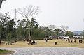 Goyu Matsunamiki Park 20130401-1.jpg