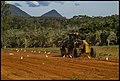Grading the rich Glasshouse Mountain soil-1 (18074905359).jpg