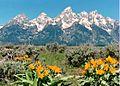 Grand Teton 1986.jpeg