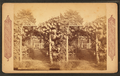 Grape arbor at Germantown, from Robert N. Dennis collection of stereoscopic views 3.png