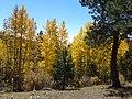 Grasses, Mullein, Pine, Aspen - panoramio.jpg
